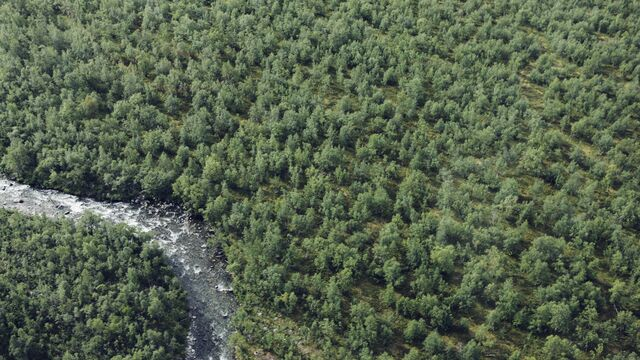 Aerial view of river and forest - Small